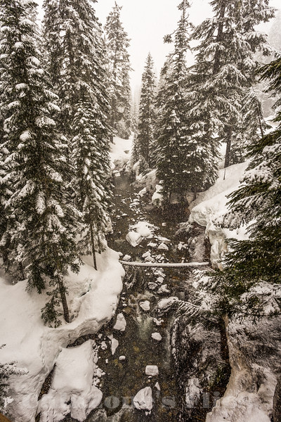 Alpental Creek- 2