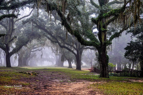 Oak Alley Mist with Cemetery