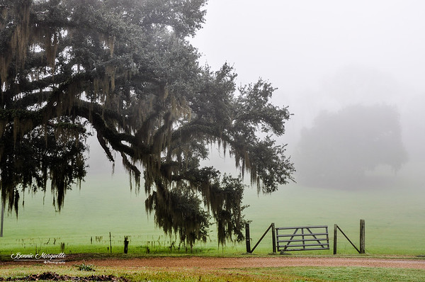 Misty Morning Paddock
