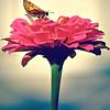 flower-gigapixel