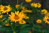 Flowers-8113