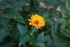 Flowers-8115