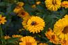 Flowers-8123
