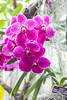 Flowers-4089