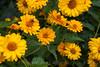Flowers-8121
