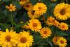 Flowers-8122
