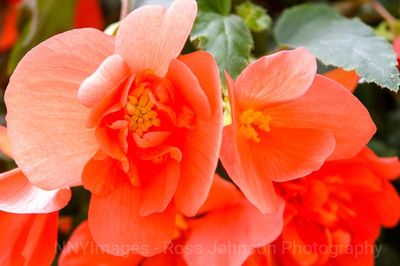 Flowers-1503