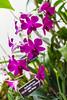 Flowers-4096