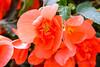 Flowers-1502