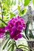 Flowers-4095