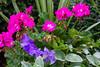 Flowers-8135
