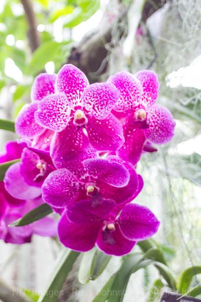 Flowers-4088