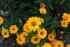Flowers-8126