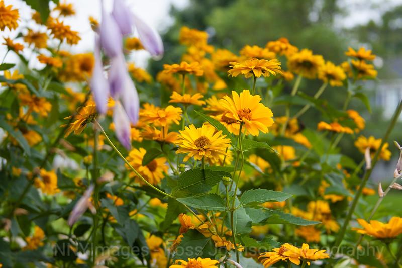 Flowers-8133