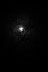 Misty moon through the trees.