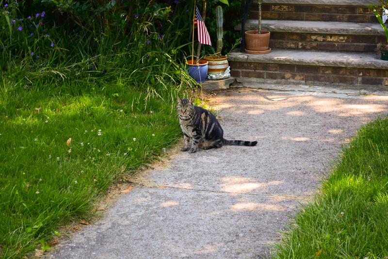 Hackensack kitty cat