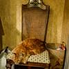 Chalupa the cat