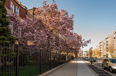 Bay Ridge Blossoms