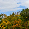 Autumn Colors of Scarsdale