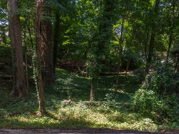 Drive Woods