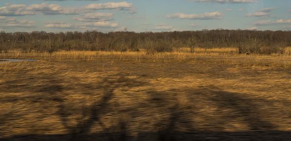 The Hamilton Marshes