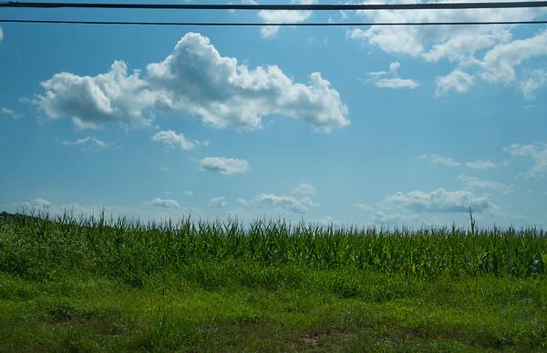 Jersey Corn Highway