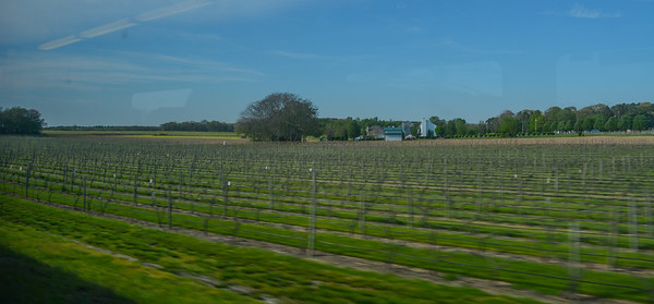 Trackside Vineyards