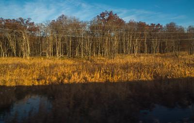 Barren Morning Marsh