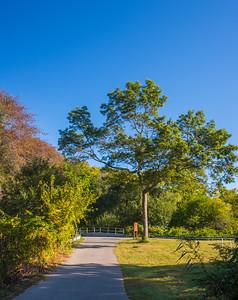 Bikeway Tree