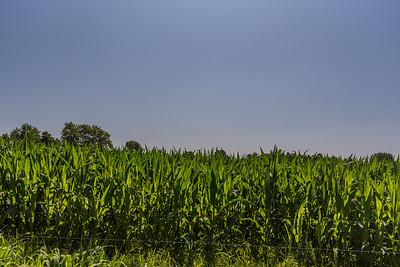 Deep Corn