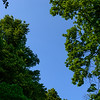 Green Trees & Blue Sky