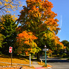 Colorful  Autumn Tree in Glen Ridge
