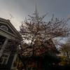 Prospect Park South Cherry Blossoms