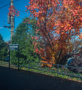 Chatham Foliage
