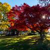 Autumn Colors of Aldan,PA