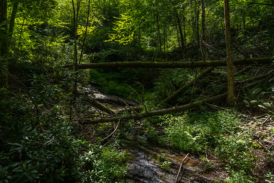 A Creek through the Woods