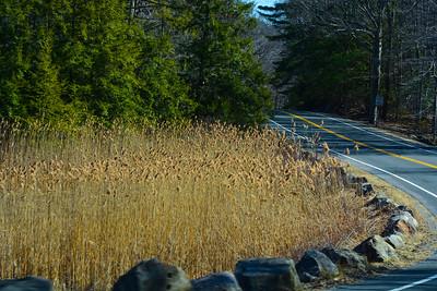 Wetlands by Silver Mine Lake