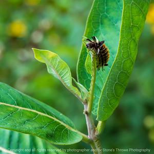 015-insect_caterpillar-wdsm-03sep21-09x09-006-400-4536