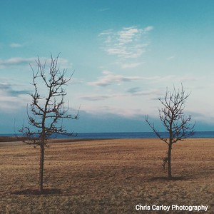 Lakefront Trees