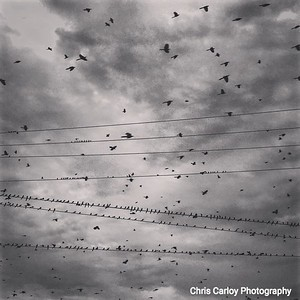 Flocks and Lines