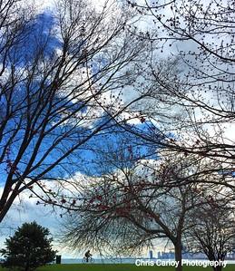 Montrose Harbor Trees