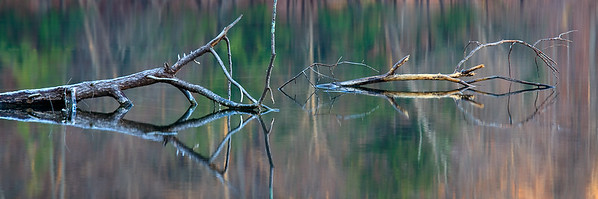 Driftwood Reflections