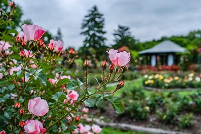 E. M Mills Rose Garden