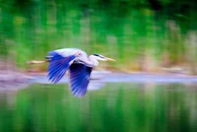 Impressionist Heron