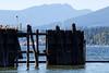 Barnet Marine Park, Burnaby BC, July 25, 2010.
