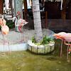 Flamingos at Costa Maya