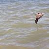 Look at them pelicangs fly!