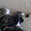 Cat at the Hemingway House. Note the extra extra toe.