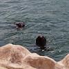 Dolphins at Costa Maya.