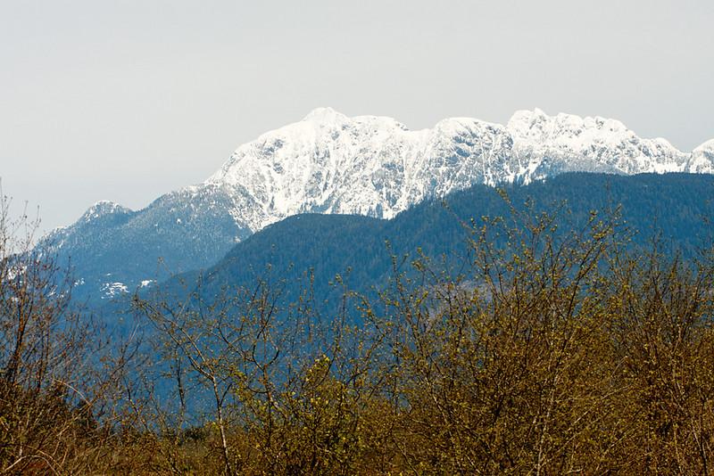 DeBoville Slough, Coquitlam BC, April 11, 2010.